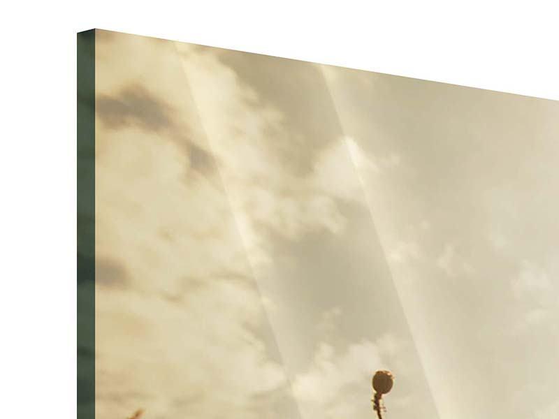 Panorama Acrylglasbild 3-teilig Das Mohnfeld bei Sonnenaufgang