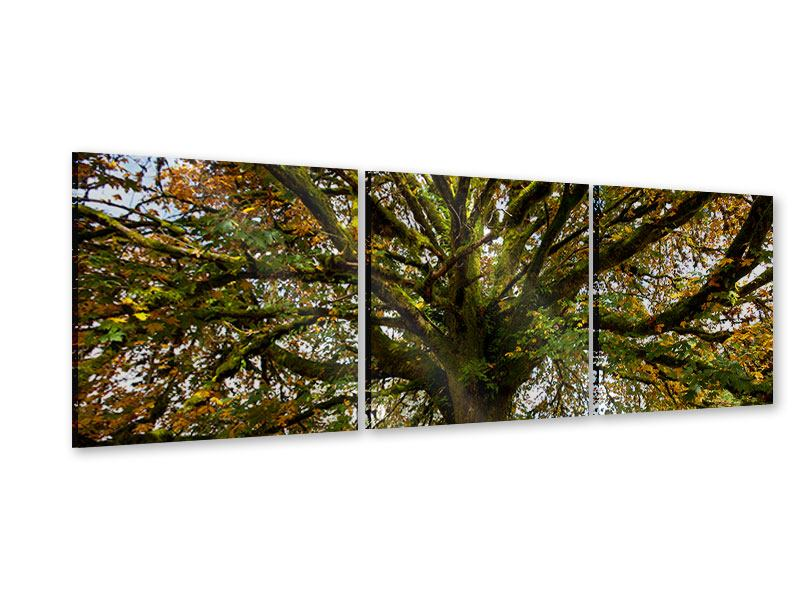 Panorama Acrylglasbild 3-teilig Mein Lieblingsbaum