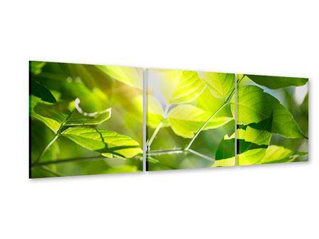 Panorama Acrylglasbild 3-teilig Es grünt so grün