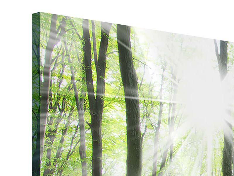 Panorama Acrylglasbild 3-teilig Magisches Licht in den Bäumen