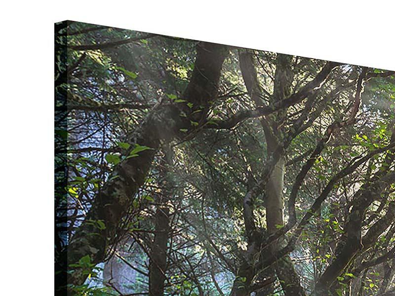Panorama Acrylglasbild 3-teilig Sonniger Waldweg