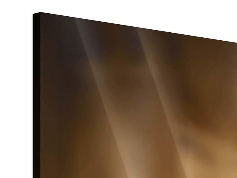 Panorama Acrylglasbild 3-teilig Wellness-Steine