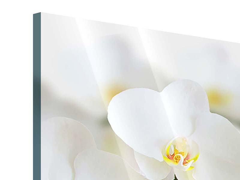 Panorama Acrylglasbild 3-teilig Weisse Orchideen
