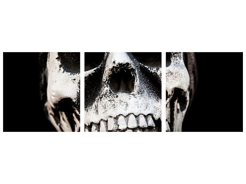 Panorama Acrylglasbild 3-teilig Skull