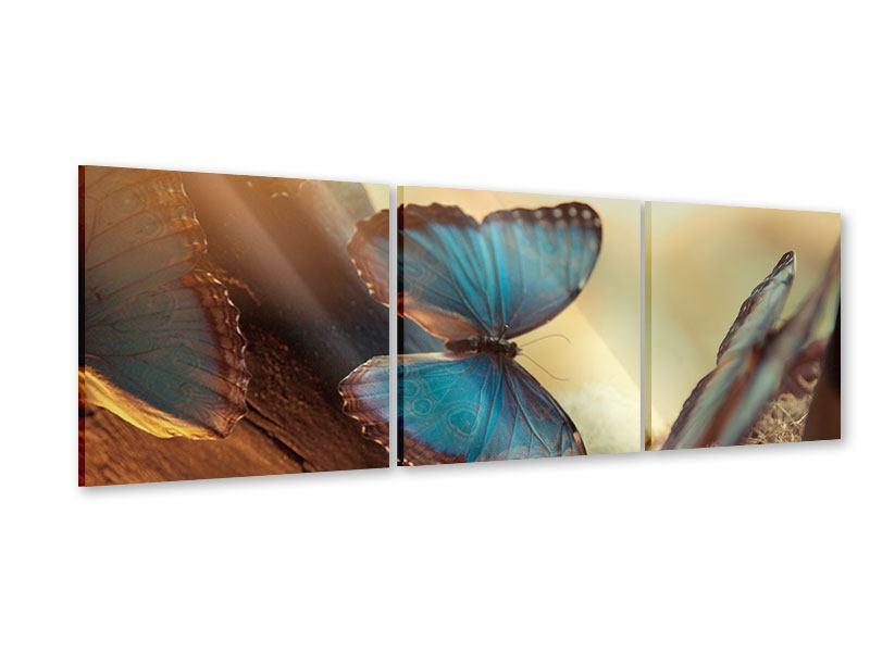 Panorama Acrylglasbild 3-teilig Schmetterlinge