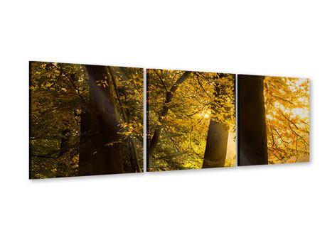 Panorama Acrylglasbild 3-teilig Herbstlaub