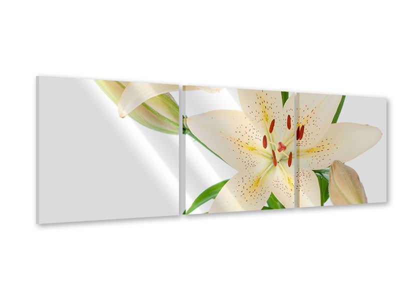 Panorama Acrylglasbild 3-teilig Weisser Lilienstrauch