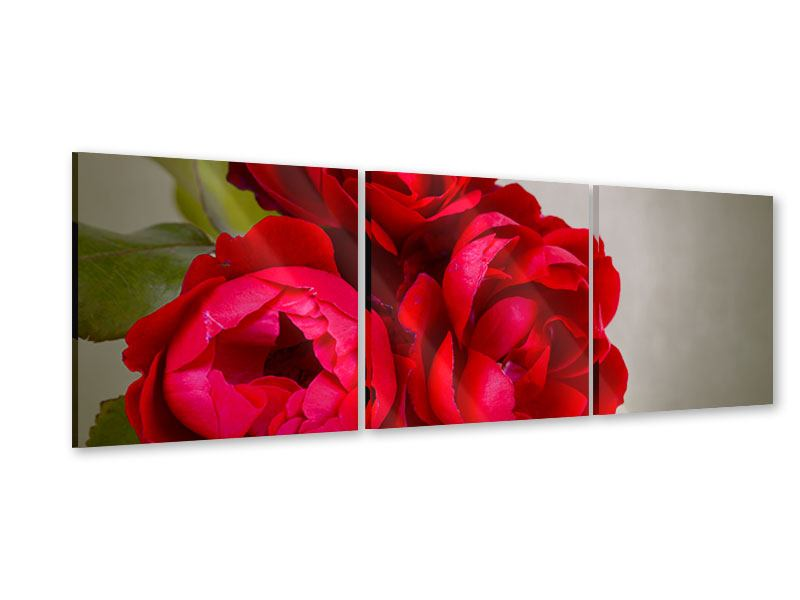 Panorama Acrylglasbild 3-teilig Drei rote Rosen