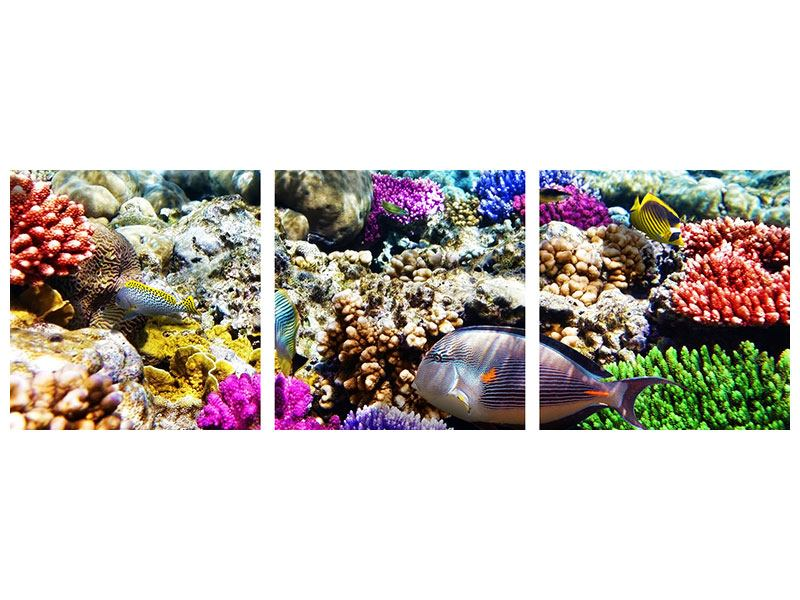 Panorama Acrylglasbild 3-teilig Fischaquarium