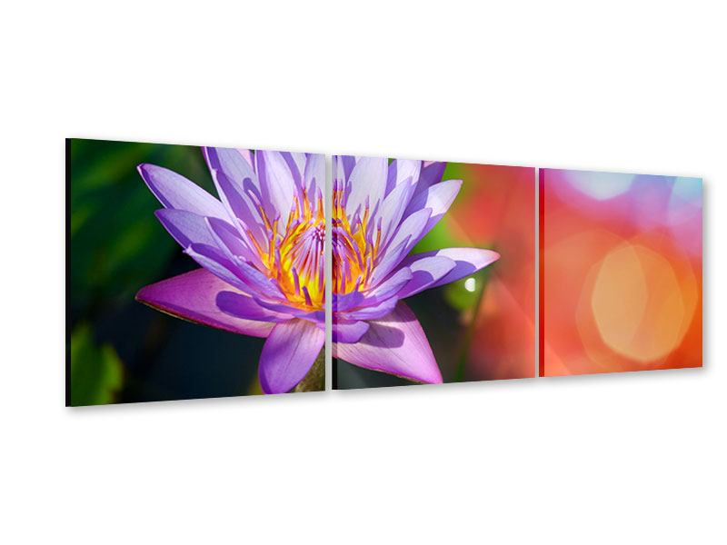 Panorama Acrylglasbild 3-teilig Colored Lotus