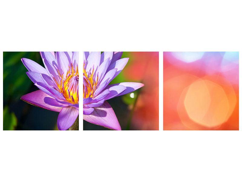 Panorama Acrylglasbild 3-teilig Colored Lotus