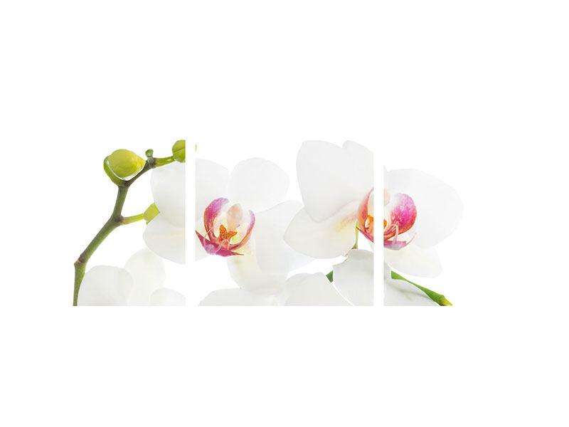 Panorama Acrylglasbild 3-teilig Orchideenliebe