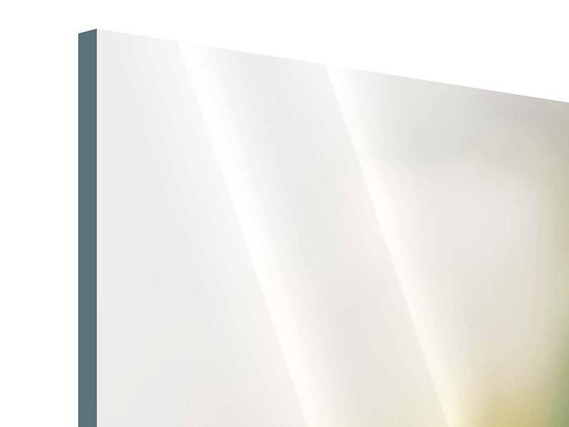 Panorama Acrylglasbild 3-teilig Tulpenperspektive