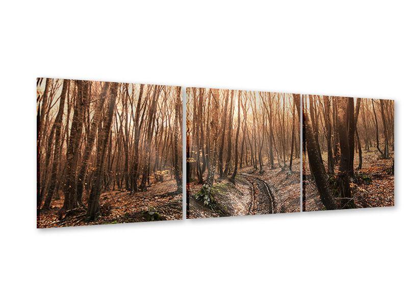 Panorama Acrylglasbild 3-teilig Der kahle Wald