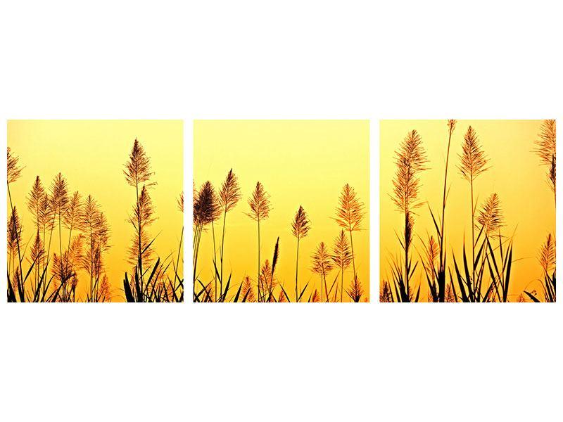 Panorama Acrylglasbild 3-teilig Die Blumen des Feldes