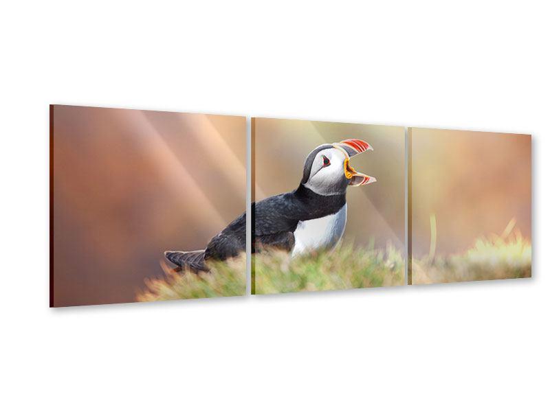 Panorama Acrylglasbild 3-teilig Der Papageitaucher