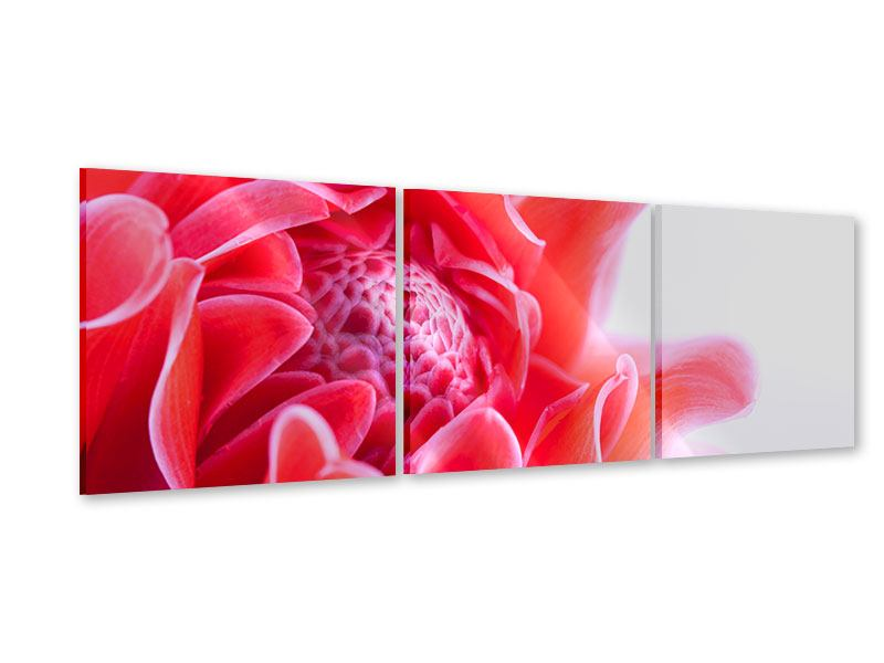 Panorama Acrylglasbild 3-teilig Etlingera XXL