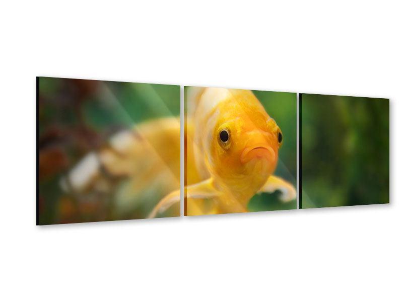 Panorama Acrylglasbild 3-teilig Der Fisch