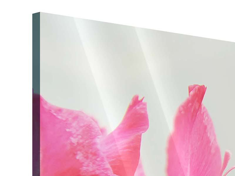 Panorama Acrylglasbild 3-teilig Gladiolen