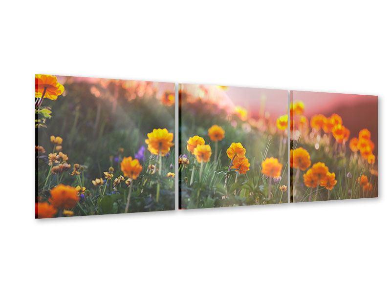 Panorama Acrylglasbild 3-teilig Die Bergwiese