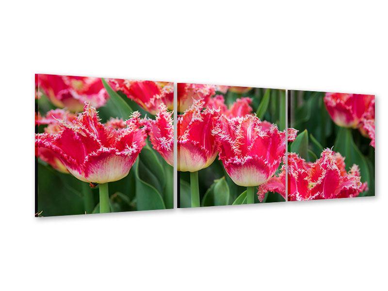 Panorama Acrylglasbild 3-teilig Die Tulpenwiese