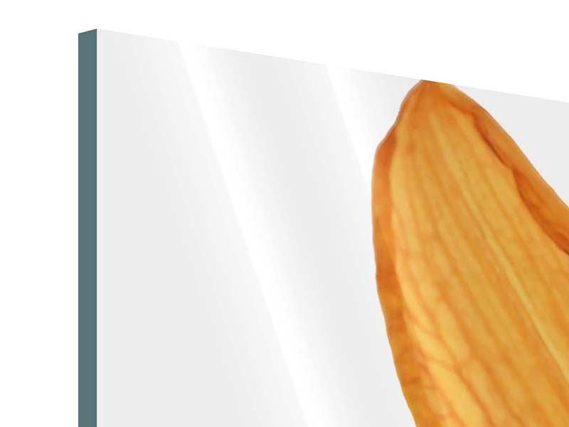 Panorama Acrylglasbild 3-teilig Die Tiger-Lilie