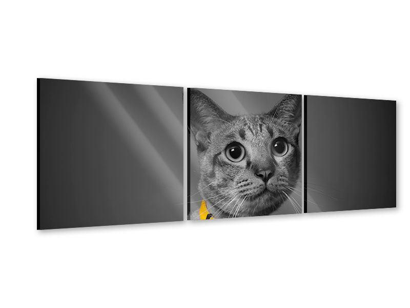 Panorama Acrylglasbild 3-teilig Katzenlady
