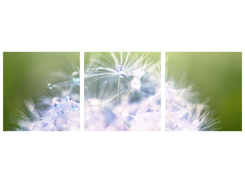Panorama Acrylglasbild 3-teilig Pusteblume XL im Morgentau