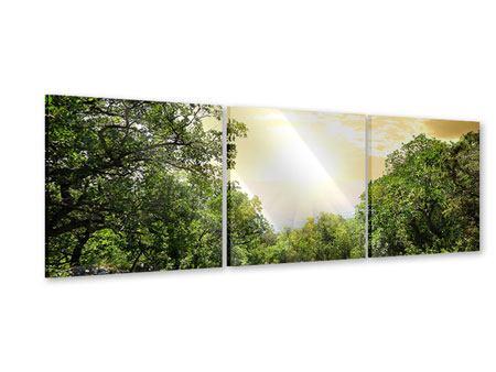 Panorama Acrylglasbild 3-teilig Am Ende des Waldes
