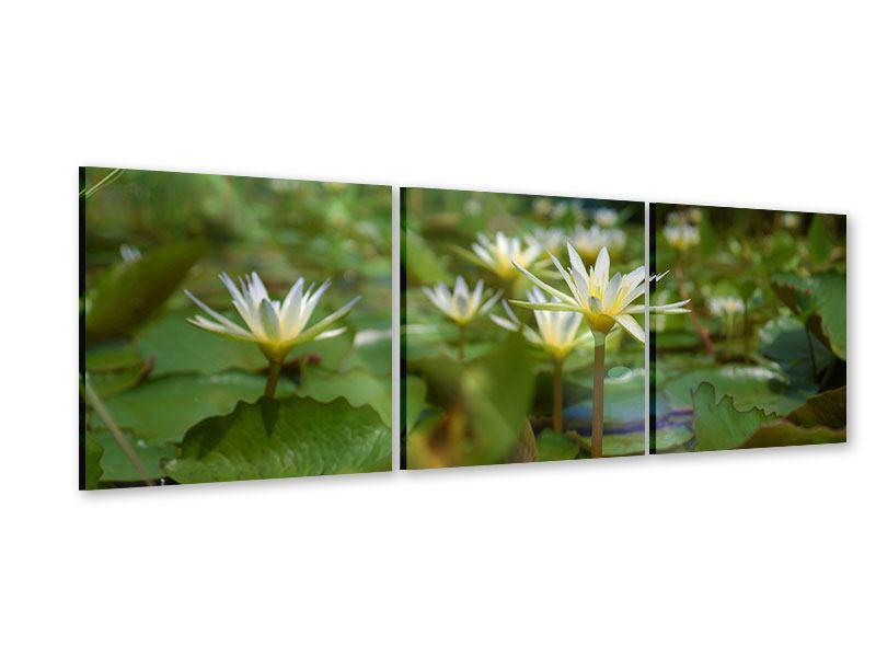 Panorama Acrylglasbild 3-teilig Im Seerosenteich