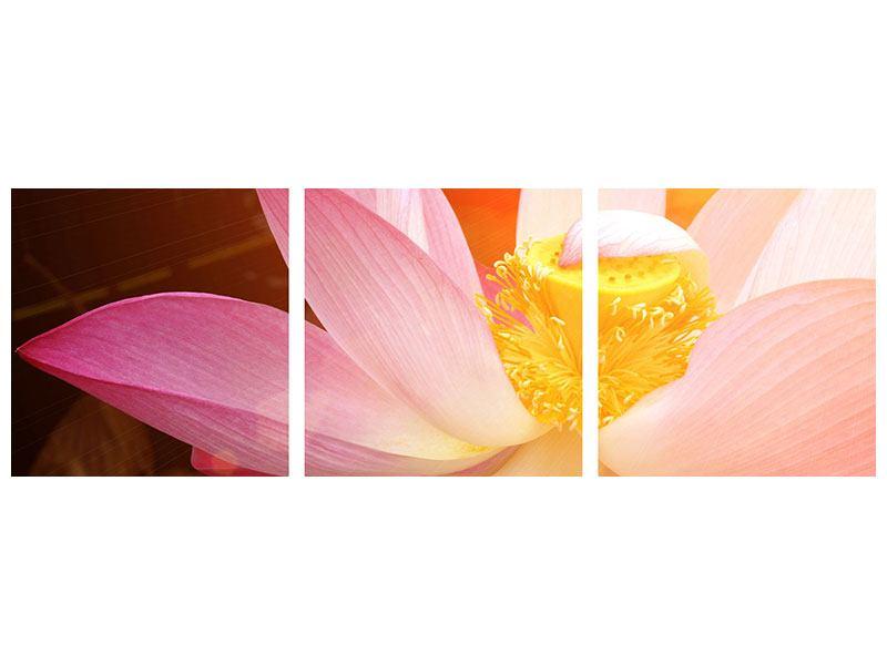 Panorama Acrylglasbild 3-teilig Close Up Lotus