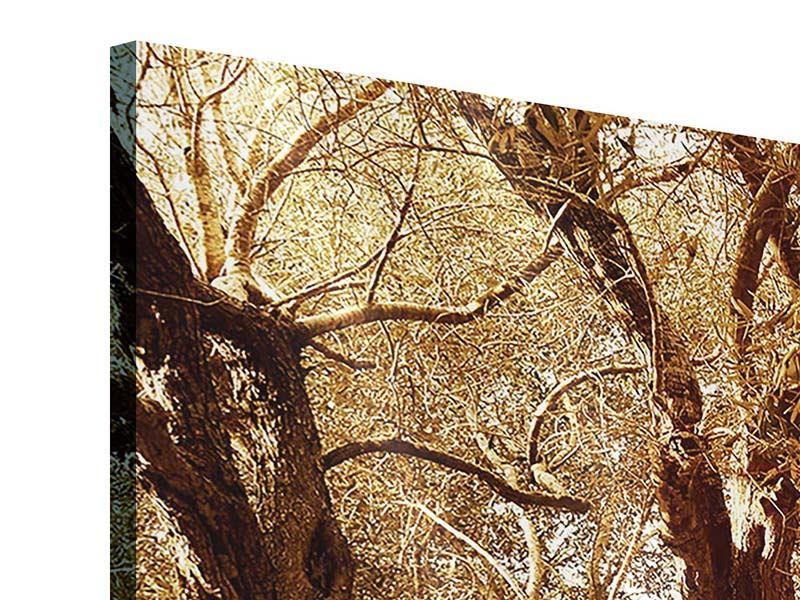 Panorama Acrylglasbild 3-teilig Olivenbäume im Herbstlicht