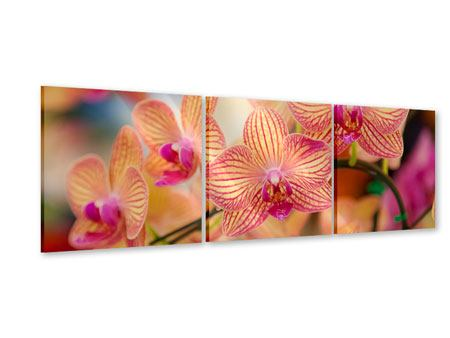 Panorama Acrylglasbild 3-teilig Exotische Orchideen