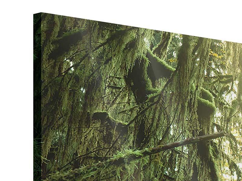 Panorama Acrylglasbild 3-teilig Verträumter Wald