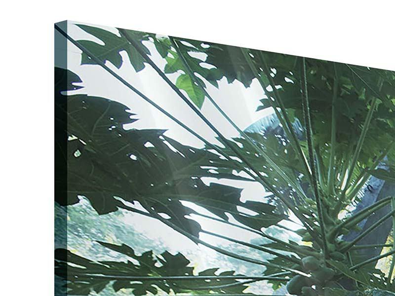 Panorama Acrylglasbild 3-teilig Dschungelstar