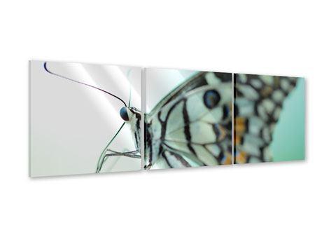 Panorama Acrylglasbild 3-teilig Schmetterling XXL