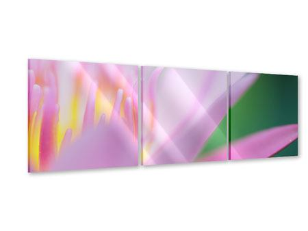 Panorama Acrylglasbild 3-teilig XXL-Lilie