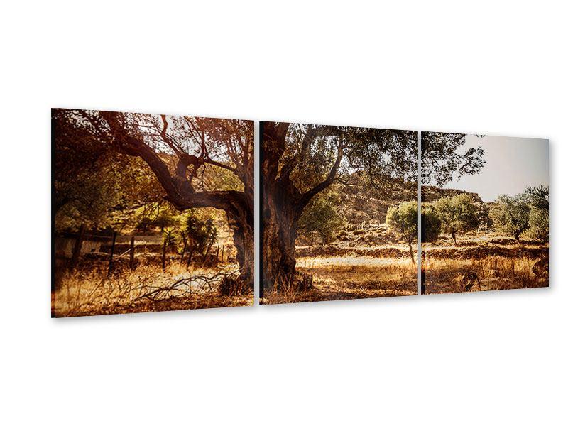Panorama Acrylglasbild 3-teilig Olivenhain