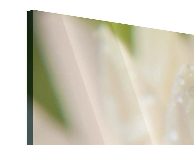Panorama Acrylglasbild 3-teilig Close Up Seerose