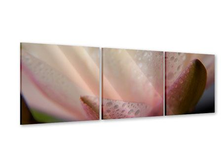 Panorama Acrylglasbild 3-teilig Close Up Seerose