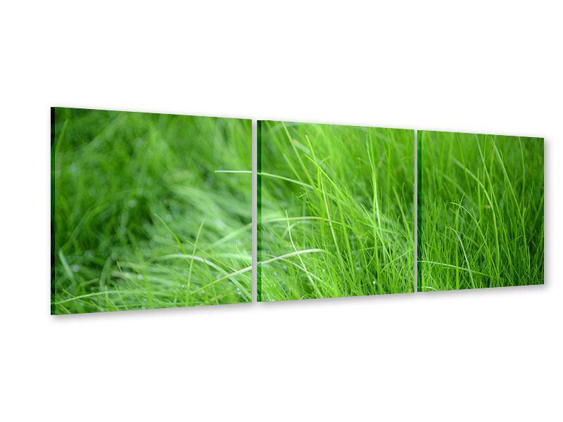 Panorama Acrylglasbild 3-teilig Grashalme