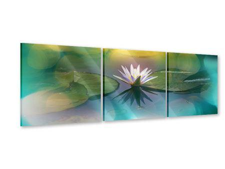 Panorama Acrylglasbild 3-teilig Lotus-Spiegelung