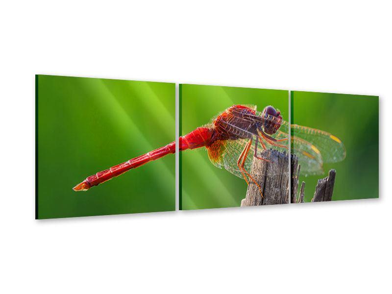 Panorama Acrylglasbild 3-teilig Libelle XXL