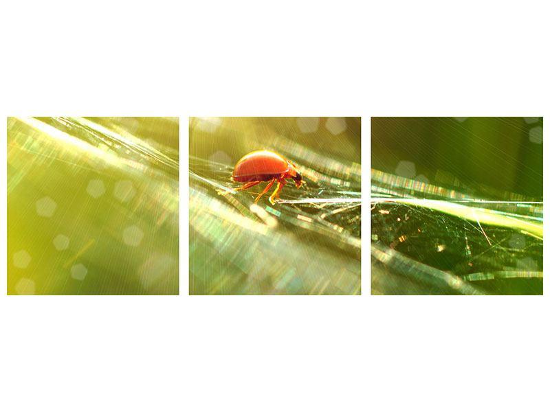 Panorama Acrylglasbild 3-teilig Marienkäfer im Sonnenlicht