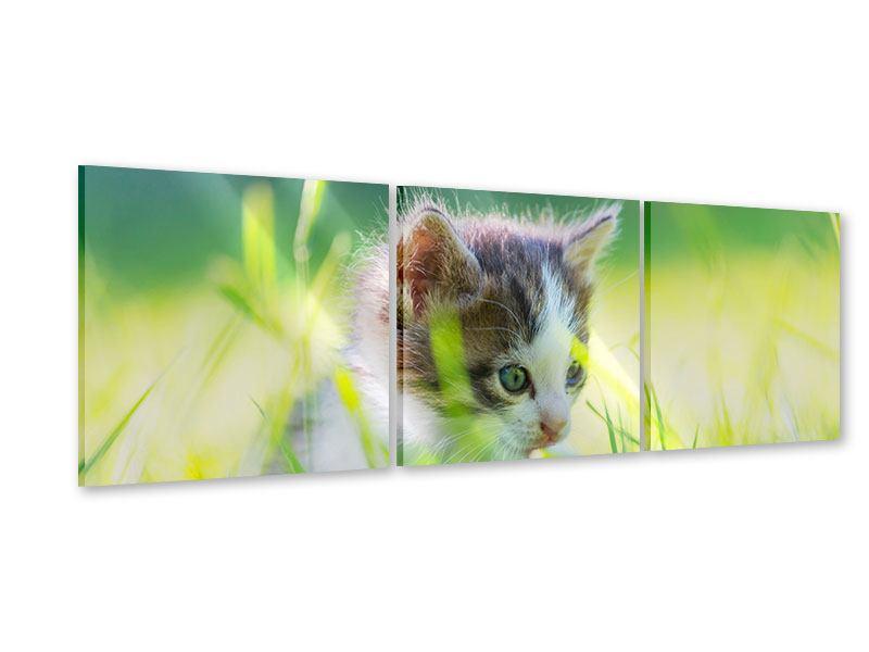 Panorama Acrylglasbild 3-teilig Kitten