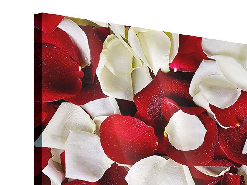 Panorama Acrylglasbild 3-teilig Rosenblätter