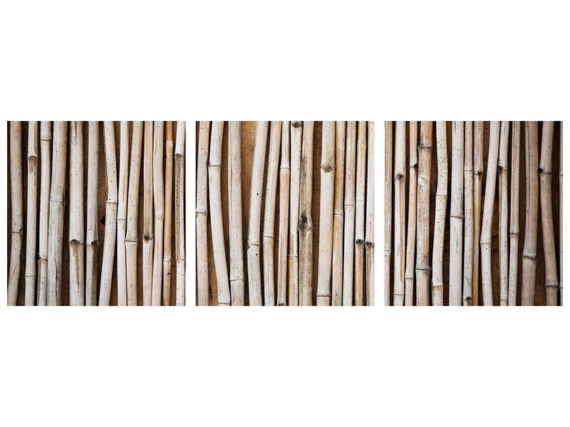 Panorama Acrylglasbild 3-teilig Getrocknete Bambusrohre