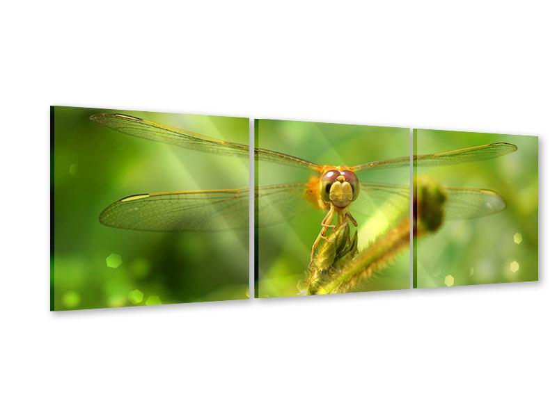 Panorama Acrylglasbild 3-teilig XXL-Libelle