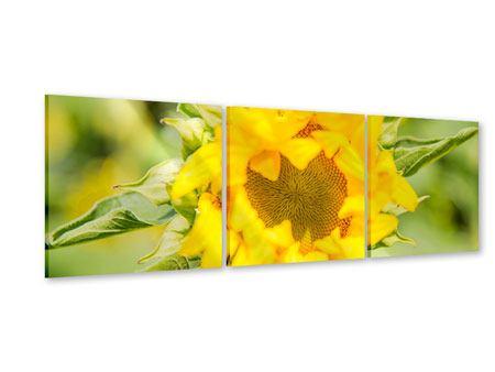 Panorama Acrylglasbild 3-teilig Wilde Sonnenblume