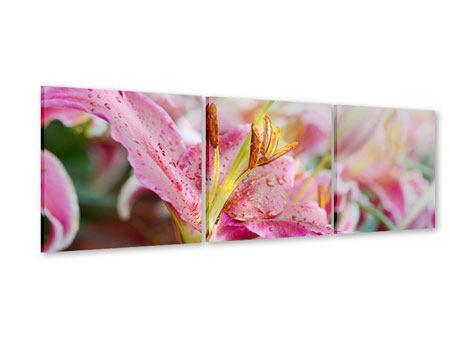 Panorama Acrylglasbild 3-teilig Lilien im Tau